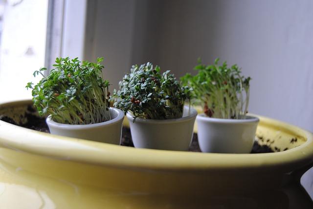 rostlinky